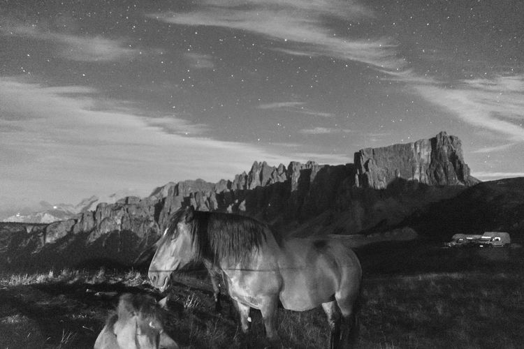 View of horse on mountain against sky
