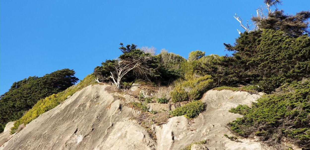 Sutro Heights Park cliff Cliffside Trees Sunny Rocks Blue Sky Nature Tree Outdoors Blue Day Growth No People Sky Low Angle View Landscape Beauty In Nature Close-up Clear Sky