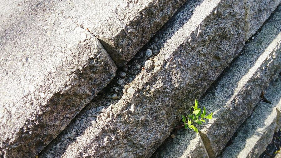 Even tough edges, grow life. Brick Wall Plants 🌱 Green Tough Edge University Campus Rock