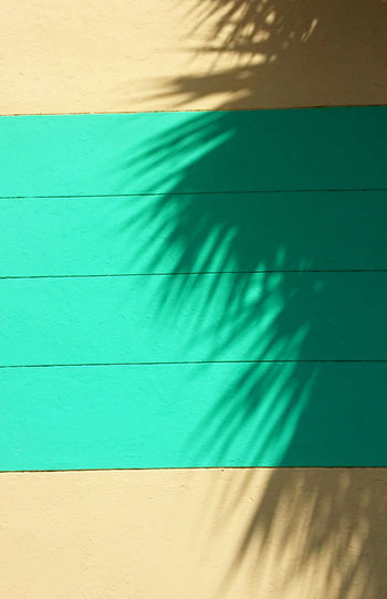 Bright Light Island Life Island View  Miami Miami Beach No Filter Palm Palm Leaf Palm Tree Pastel Power Shadowplay Brightly Lit Florida Florida Life Florida Nature No People Outdoors Pastel Colored Pastel Colors Shadow The Architect - 2018 EyeEm Awards