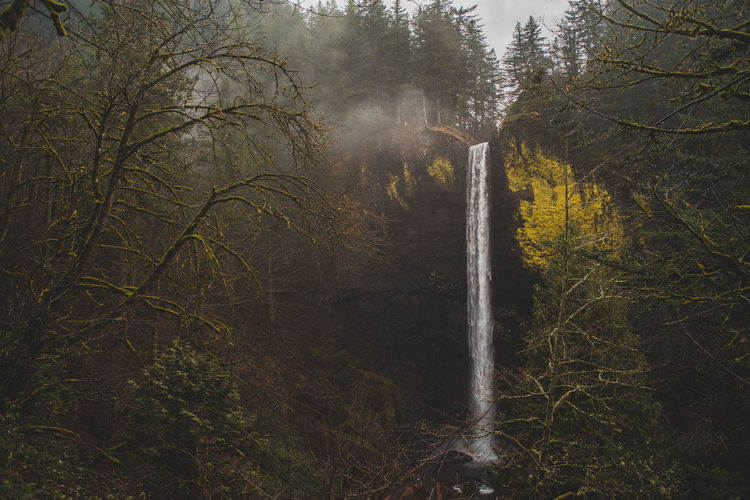Oregon Pacific Northwest  Beauty In Nature Branch Day Fog Forest Lush Foliage Motion Nature No People Outdoors Power In Nature Scenics Tree Water Waterfall