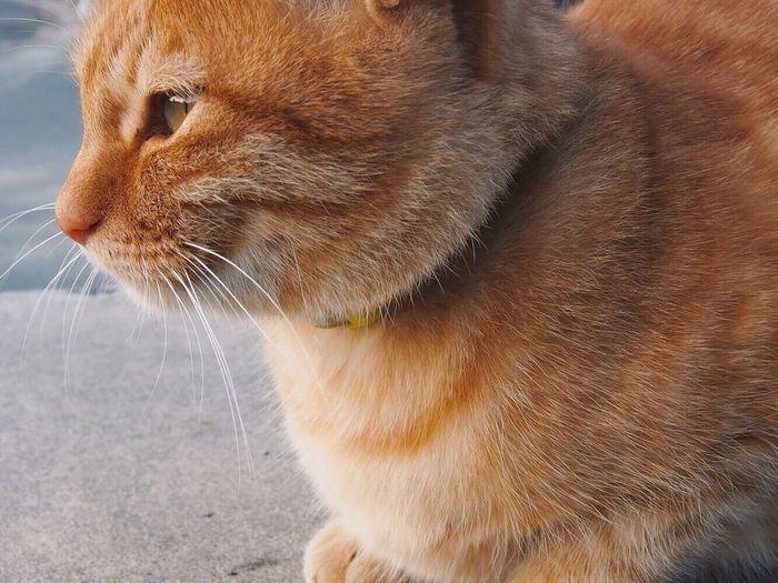 Cat Island Teshima 豊島 Kagawa, Japan Lovely 09112017