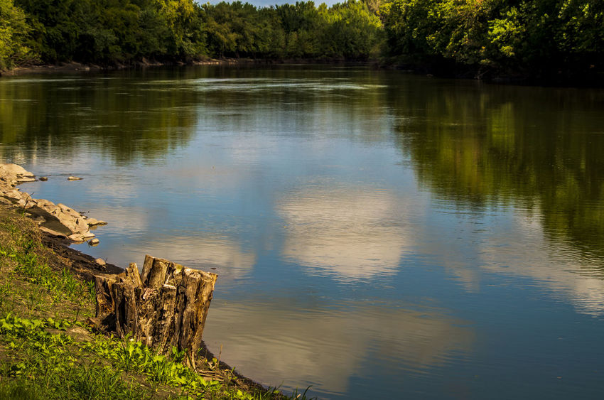 Bark Beauty In Nature Day Driftwood Forest Lake Land Log Nature No People Non-urban Scene Outdoors Plant Reflection Scenics - Nature Tranquil Scene Tranquility Tree Water Wood Wood - Material