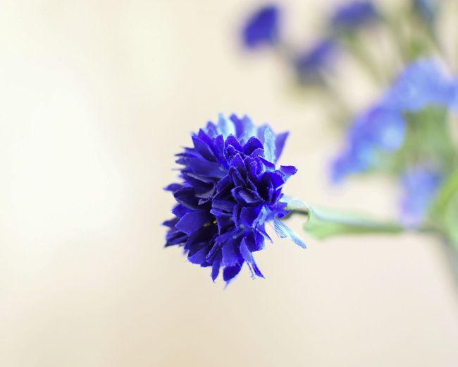 macro of blue