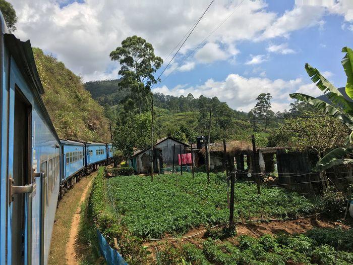 Sri Lanka Blue