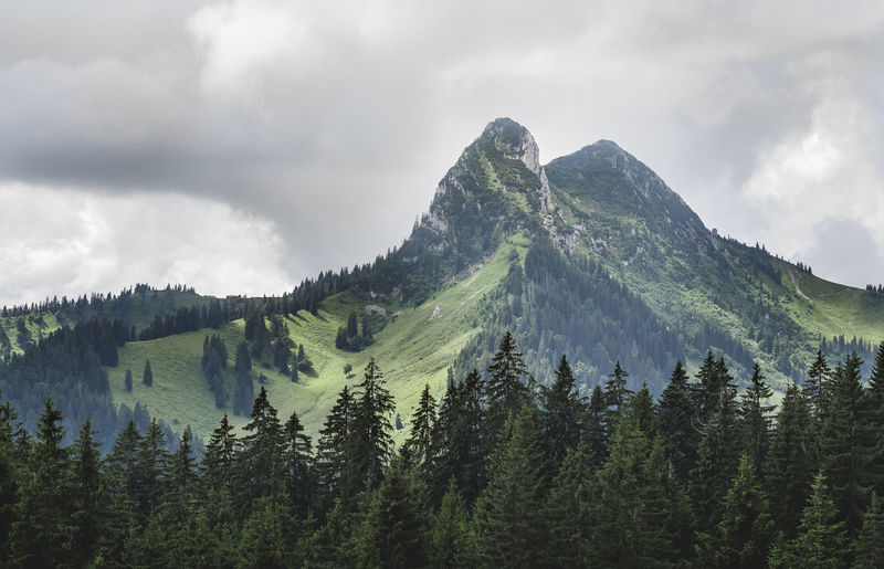 Trees growing on mountain against cloudy sky