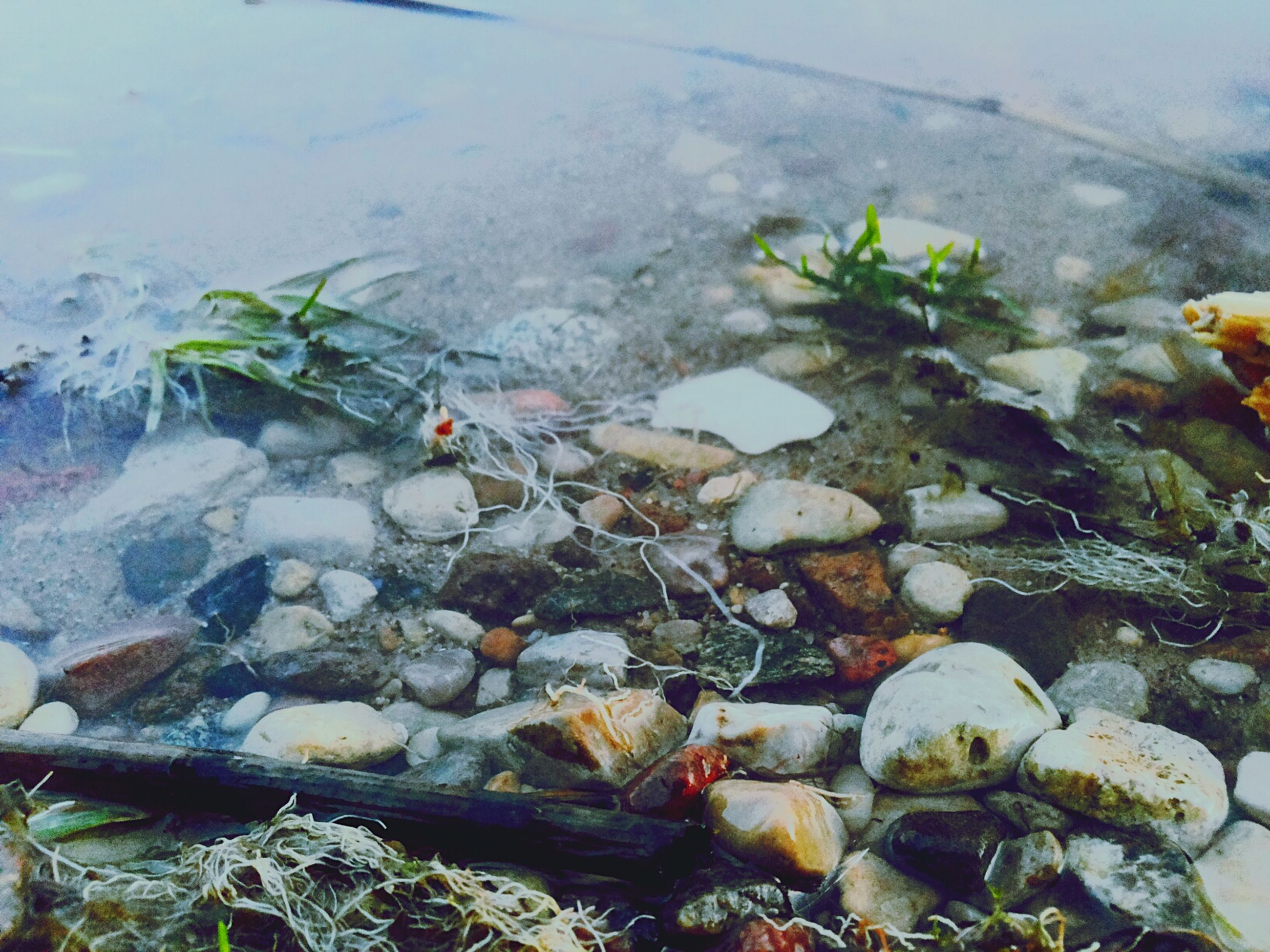 water, high angle view, nature, rock - object, plant, stone - object, tranquility, beauty in nature, leaf, day, outdoors, growth, no people, stream, pond, lake, rock, abundance, river, floating on water