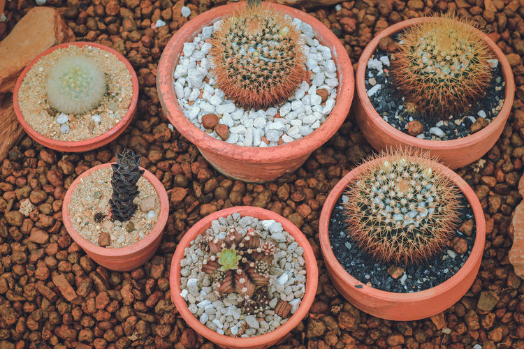 Beautiful cactus. Nature Cactus Garden Flora Minimalism Field Outdoors Plant Hipster Tropical Close-up Beauty In Nature No People High Angle View Potted Plant Still Life Freshness Directly Above Growth Indoors  Large Group Of Objects Arrangement