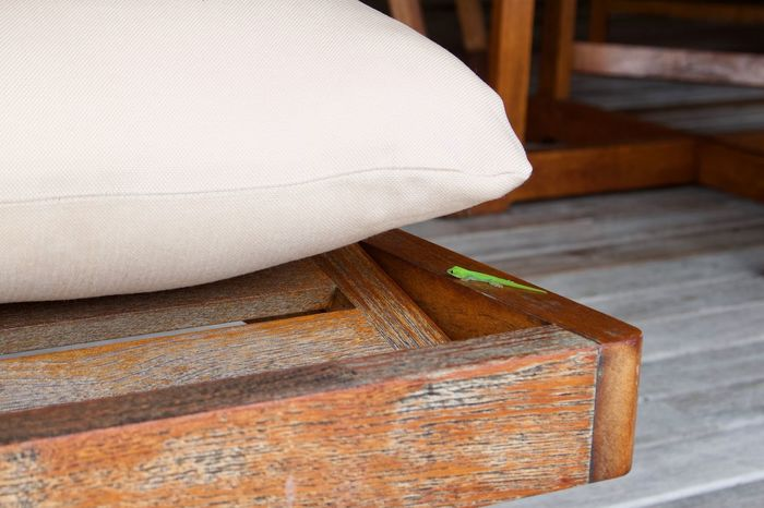Green Lizard Lizard Baby Lizard Book Brown Chair Close-up Day Focus On Foreground Furniture High Angle View Indoors  No People Pattern Pillow Publication Relaxation Seat Still Life Table White Color Wood Wood - Material