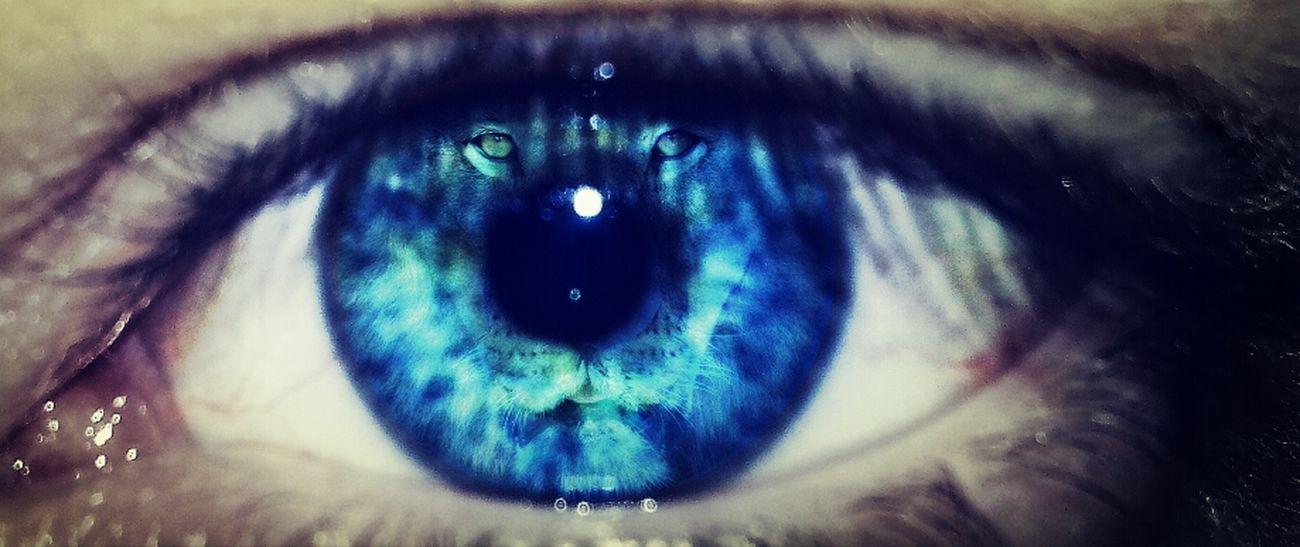 Me Animal Eye Photography Myself Edit Lion Löwe  Augen Auge Pics By Mr_badabing