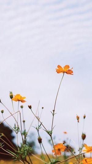 Flower EyeEm Flower N3T