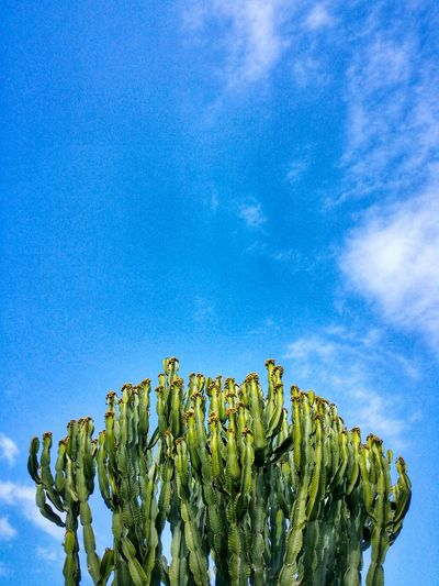 Contrada Kastalia Ragusa Sicily Italy Travel Photography Travel Voyage Traveling Mobile Photography Fine Art Nature Succulents Sky Clouds Mobile Editing