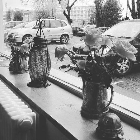 Le rose sono sempre belle..... ILoveBristol Bristol Bristol Bristolart Arbour Bristolarbour Loves_nature Loves_bristol Igersbristol Loves_uk Loves_united_kingdom Christmas2015 Christmastime Travelblogger Discovering Loves_world Superpicture Explore_britain Loves_england Igersengland Livebristol Bristol247 Flower Rosé Roses loves_nature loves_naturelife loves_flowers kissfromtheworld