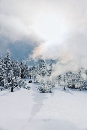Shades of Winter EyeEm Best Shots Shadows & Lights Sunlight Wintertime Winter Wonderland Snow Cold Temperature Winter Pinaceae Pine Tree Forest Mountain Tree WoodLand Nature Snowcapped Mountain No People Polar Climate Frozen Outdoors Landscape Snowing Beauty In Nature Day Sky