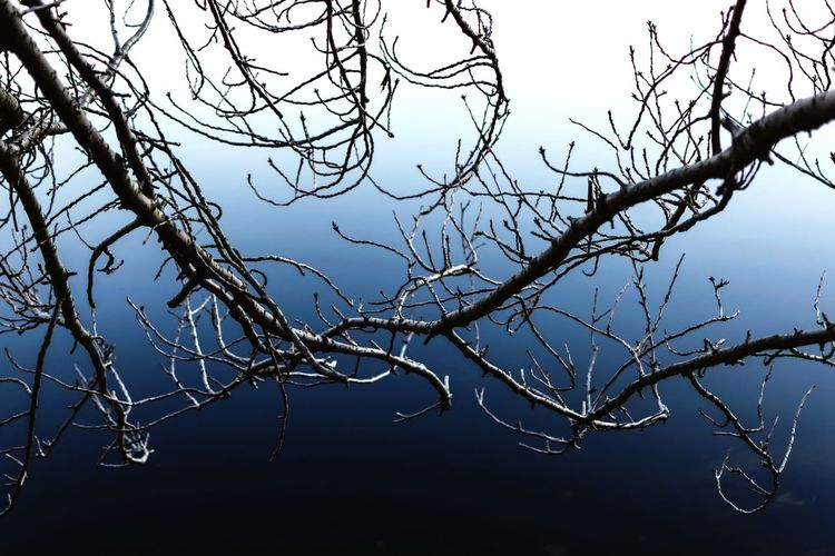 Close-up of branches against sky