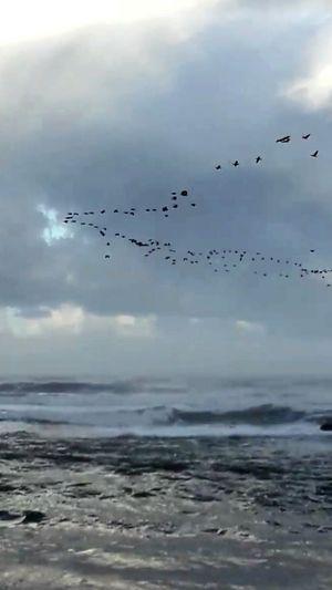 Bird Flying Flock Of Birds Large Group Of Animals Animals In The Wild Animal Wildlife Animal Themes