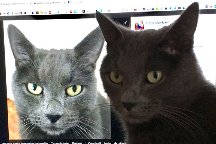 Twice's Cat