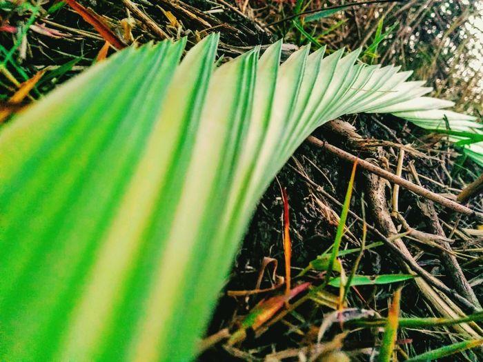EyeEmNewHere Green Color Nature Plant Outdoors EyeMe Bestshot Leaf Dates Leaf