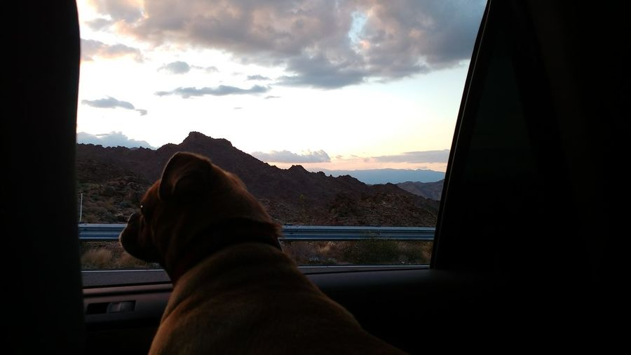 Midasthefriendlychug Dog Looking Through A Window Dog Looking Through Car Window Sky Clouds Mountain Mountains Outdoor Photography Nature Let's Go. Together.