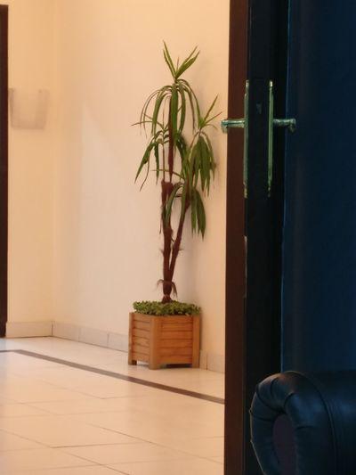نبتة يوم اسنان مشفى Mashfa Potted Plant Day