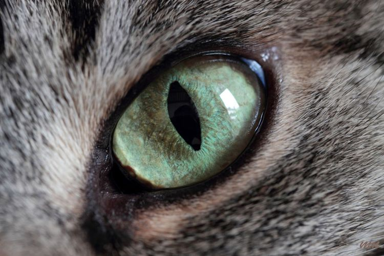 Animal Body Part Animal Eye Close-up Detail Extreme Close Up Extreme Close-up Eyesight Macro Part Of