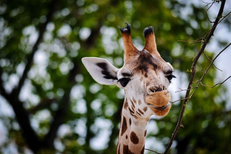Low angle view of giraffe on tree