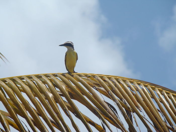 Low angle view of bird perching on palm leaf against sky