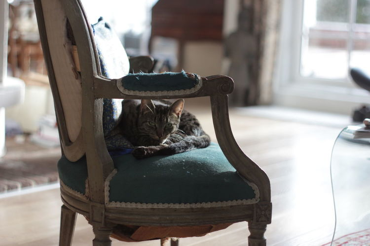 Calmness Cat Cat Lovers Depth Of Field Feline Indoors  Indoors  Looking At Camera Old-fashioned One Animal Pets Portrait Still Life