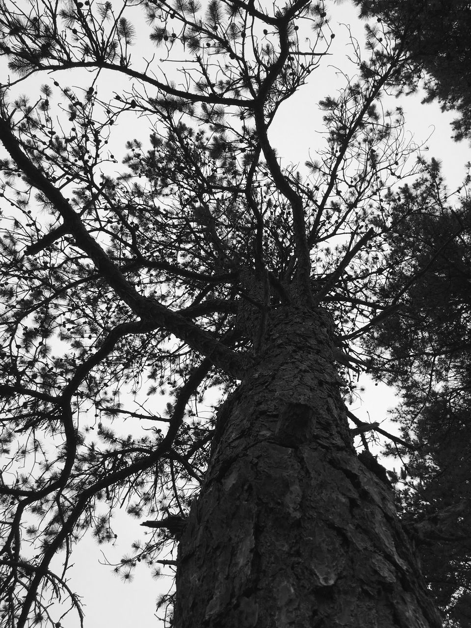 tree, low angle view, branch, tree trunk, nature, growth, day, outdoors, beauty in nature, no people, tranquility, sky