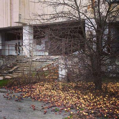 Кому светящихся яблочек? припять яблоки Мертвый_город дк_энергетик pripyat dk_energetic abandoned_city dead_city apples
