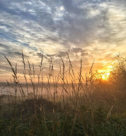Sunset Nature Tranquil Scene Beauty In Nature Tranquility Sun Scenics No People Grass Sky Outdoors Cloud - Sky Field Sunlight Timothy Grass Landscape Water Day