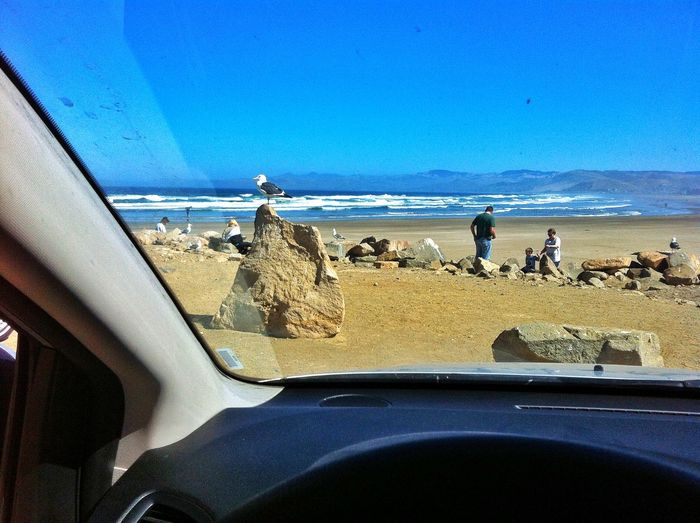 I will be very excited to see the sea, even in order to escape the hot sun only in the car to see the same is very satisfied, the bird is waiting for me to accompany, to take in California Coastal Road Town First Eyeem Photo Great Outdoors On The Road Photography The Great Outdoors - 2015 EyeEm Awards USA IPhoneography Animals