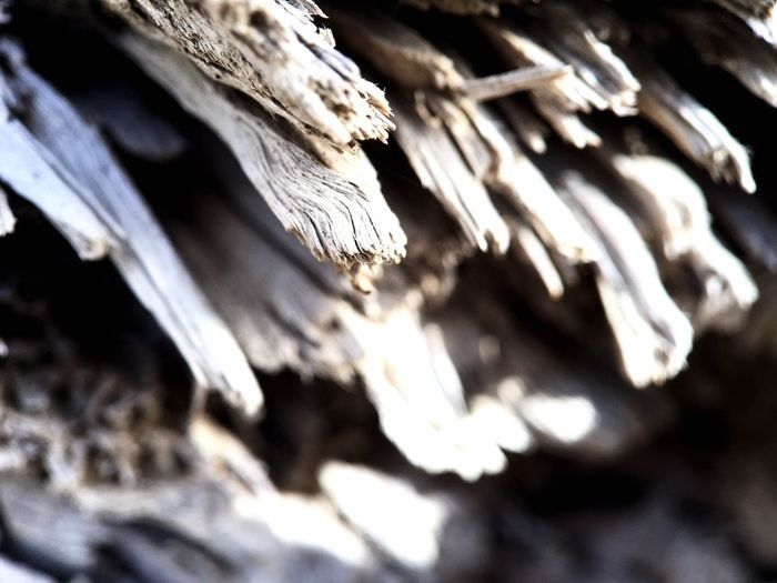IPS2016Texture Wood Trees Macro Photography Perspective Shotoniphone6splus IPS2016Closeup