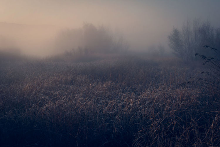Beauty In Nature Day Fog Landscape Nature No People Outdoors Silence Of Nature Sky Tree