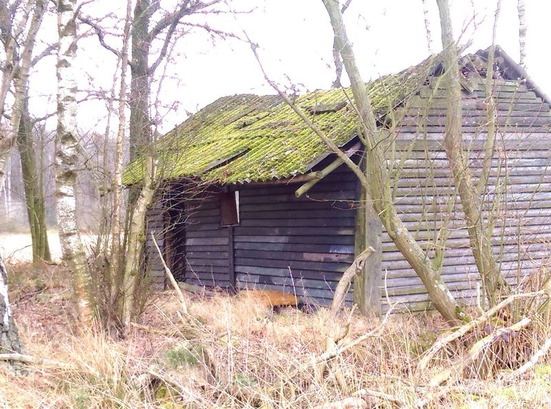Building Exterior Old Shed Forestwalk Wood Structure Abandoned Buildings Outdoor Photography Between The Trees Freedom Exploring Urban Landscape #Nature #photography