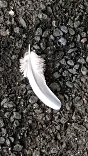 Eyeem Photography Feather  Close-up No People Outdoors Fragility Angel Sign Angels Are Everywhere