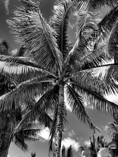 Black & white Travel Black And White Mauritius Palmtree Sunlight Outdoors Day