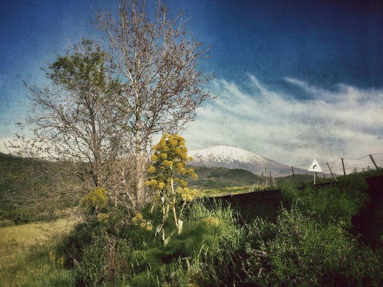 Etna Taking Photos Sicily Landscape Getting Inspired Nature Etna Mountains And Sky Flowers Cesarò-nebrodi