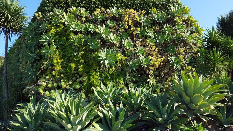Flowers,Plants & Garden Succulent Plant Plants 🌱 Eyeem Plants Plants Culver City Local