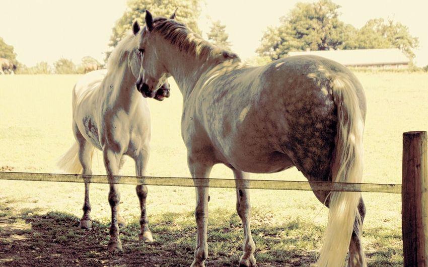 1/4 HorsePlay I
