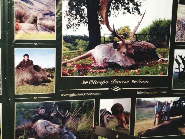 Охотник охота bi cacca