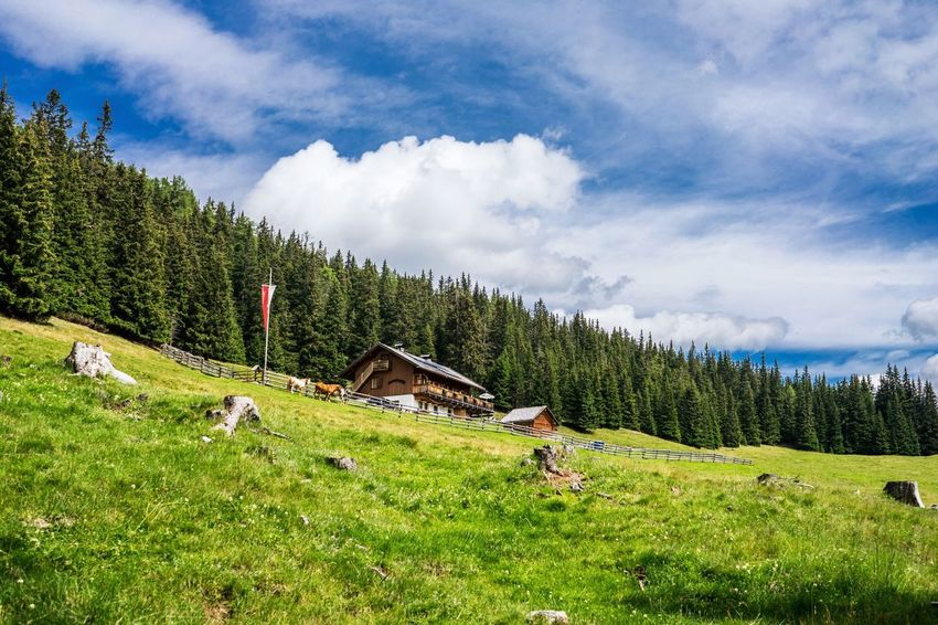 Alm Malga Südtirol South Tyrol Tree Nature Scenics Beauty In Nature Grass Sky Non-urban Scene Cloud - Sky Mountain Green Color Day Tranquil Scene Tranquility Growth Landscape Forest Outdoors Real People Adventure Vacations Italy