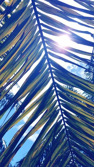 Growth Nature Full Frame Day Leaf Tree No People Green Color Low Angle View Outdoors Backgrounds Palm Tree Beauty In Nature Frond Close-up Sky Sunlight Shade Shadow EyeEmNewHere