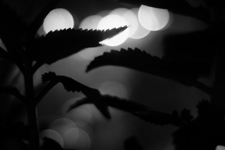 Close-up of silhouette leaves against sky at night