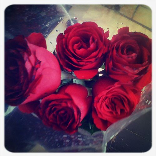 Roses♥ Flowers love it! Smell The Roses