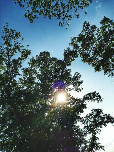 EyeEm Selects EyeEm Gallery Tree Sky Sun Sunbeam Treetop Woods