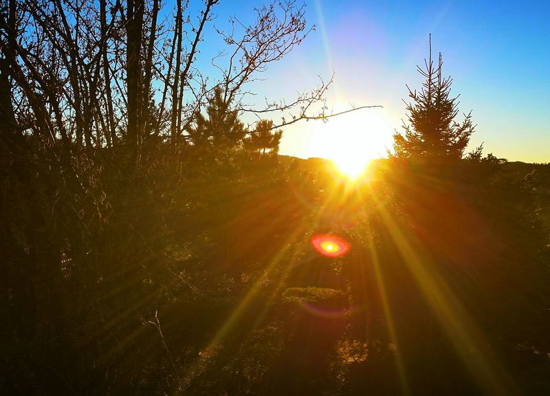 France Franchecomte Doubs Metabief Sunrise Sunlight Sun Sunbeam Sky Tree Lens Flare Nature Outdoors Beauty In Nature No People Day Dritphoto