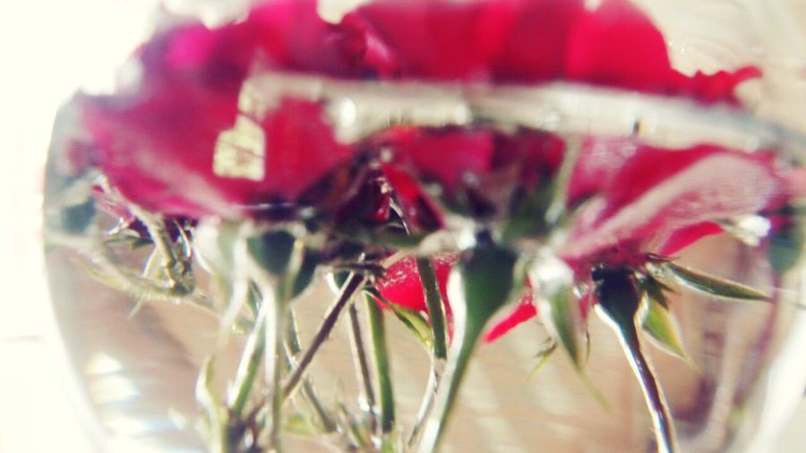 Beautifully Organized Red Close-up Flower Freshness No People Fragility Flower Head Indoors  Day Blossomed Organization Grandmothers Crafted Creation