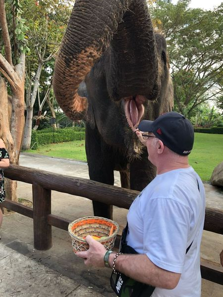 Giving the command to trunk up for food Elephant Feeding Elephant Trunk Bali, Indonesia Bali Zoo Elephant Elephants Food Food And Drink Real People Leisure Activity Men Casual Clothing Lifestyles Nature People Eating