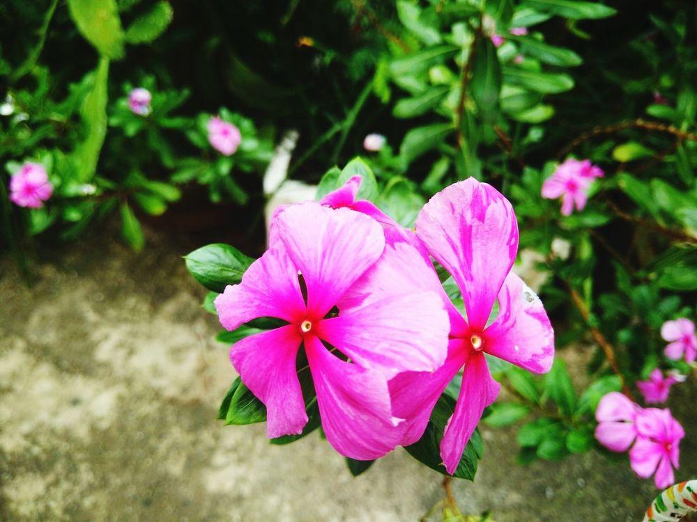 Flower Pink Color Day
